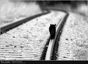 railtrack-cat